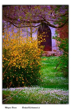 Gardens of Ninfa Lazio Roma