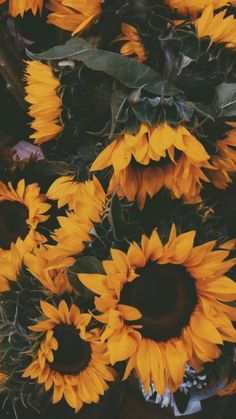 phone wallpaper sunflower In.