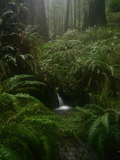 redwood forest waterfall - Google Search