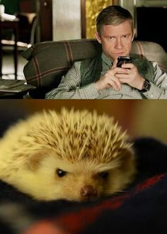 BBC Sherlock's John Watson & a hedgehog. There is no difference. Adorable little hedgehog Jawn. (Martin Freeman is too cute like this. Quotes Sherlock, Sherlock Holmes Bbc, Sherlock Fandom, Sherlock John, Jim Moriarty, Watson Sherlock, John Watson, Johnlock, Martin Freeman