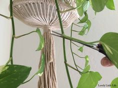 where to cut a pothos plant for propagation