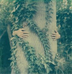 hug a tree, photograph, design squish blog