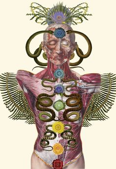 """""""chakras"""" anatomical collage art by bedelgeuse"""
