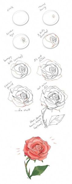 how to draw a rose guide - Learn how to draw flowers like roses of lilies and turn them into really beautiful wall art. practice flower drawings easy on chalkboard with step-by-step tutorials and easy to follow the instructions and get amazing results! Drawing is relaxing and fun for all ages! #drawings #howtodraw #flowers #wallart #walldecor #drawingtips