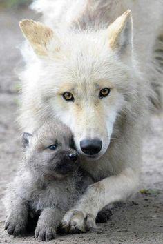My friend the Wolf