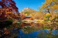 NAEJANGSAN NATIONAL PARK, SOUTH KOREA Naejangsan National Park is a famous tourist destination, particularly in autumn due to its beautiful autumn foliage. The park is home to a total of 919 plant species and 1,880 animal specie