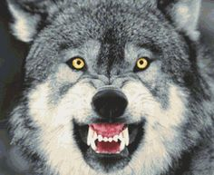Snarling #Wolf Counted Cross Stitch Pattern #xstitch