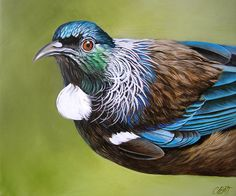 Close-up of a tui, NZ bird showing the feathers that gave it the nickname parson bird - Craig Platt NZ native bird artist Tui Bird, Bird Artists, Small Canvas Paintings, Maori Designs, New Zealand Art, Nz Art, Postage Stamp Art, Maori Art, Animal Magic