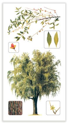 Flora, Plants, Human Body, Naturaleza, Learning, Plant, Planting, Planets