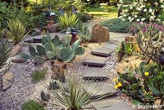 Cactus Landscape on Pinterest Cacti Garden Cacti and