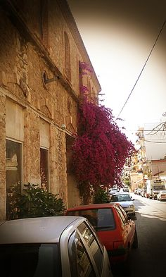 chalkida city  greece flowers