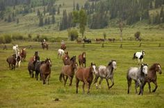 A horse never runs so fast as when he has other horses to catch up and outpace.