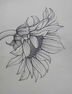 Pencil Art Work Sunflower Mixed Media Original Drawing-Print - Health and Fitness - Kunst Sunflower Drawing, Sunflower Tattoos, Sunflower Art, Sunflower Sketches, Sunflower Illustration, Sunflower Tattoo Shoulder, Sunflower Tattoo Design, Drawing Sketches, Art Sketches