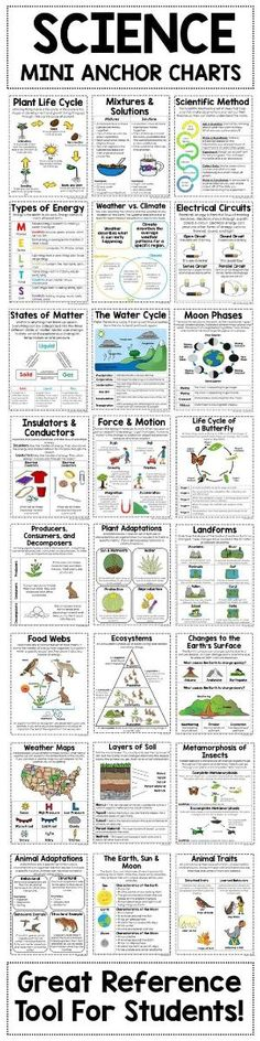 Science Poster Bundle Are you a or Grade Science teacher looking to save time? Check out my Science Mini Anchor Charts. These 30 anchor charts will help you teach key science concepts such as types of energy, ecosystems, force and motion and so muc Science Topics, Science Lessons, Science Education, Teaching Science, Science For Kids, Science Activities, Science Experiments, Physical Science, Science Ideas