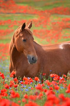 Horse in flower field