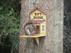 """It was not a Nut House!"" Patty Duke as Neely O'Hara in ""Valley of the Squirrels"" Squirrel Feeder, Cute Squirrel, Bird Feeders, Squirrels, Raccoons, Pet Home, Chipmunks, Spring Crafts, Guinea Pigs"