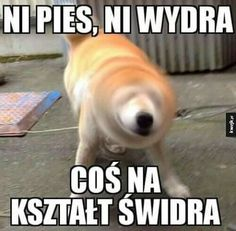 Znajdziesz tu memy ,komixxy i dużo zabawy . serdecznie zapraszam … #losowo # Losowo # amreading # books # wattpad Stupid Funny Memes, Wtf Funny, Funny Cute, Jikook, Reaction Pictures, Funny Pictures, Polish Memes, Weekend Humor, Best Memes Ever