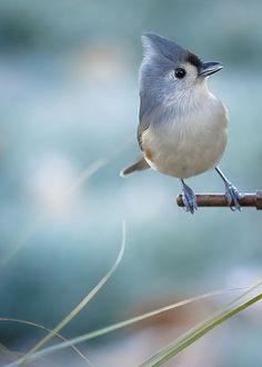 Tufted Titmouse by the other side of the creek