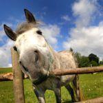 Study Confirms Horses 'Talk' to Human Handlers