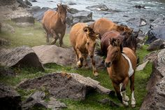 Wild horses running photography. Running horse Mongolian travel photograph. Gift for horse lovers Rustic country western wall art home decor...