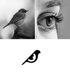 UNITY: Cleverly combined both a bird and an eye (birds eye) together in unity for one symbolic design.