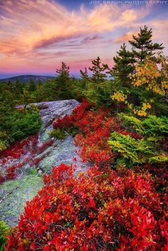 Pastel clouds light up a post-sunset view on top of Beech Mountain (Acadia National Park, Maine) by Joe Braun
