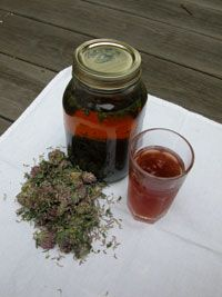 Herbs for repairing and restoring lung health and tissue.