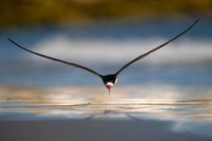 Mind-Blowing Pictures - Winners Of The 2019 Bird Photographer Of The Year Contest Photography Competitions, Photography Awards, Wildlife Photography, Amazing Photography, Andrew Bird, Nicolas Vanier, Mind Blowing Pictures, San Pedro, Trumpeter Swan