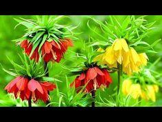 25 Best Cveće Images In 2019 Planting Flowers Beautiful
