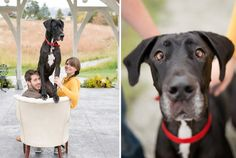 Family Session with Great Dane, Kelowna
