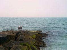 By the ocean.  Birds on a rock.  Photo by Jennifer Fivelsdal of JFIVE Homes Realty | www.jfivehomes.com