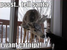 Christmas Meme of the Day http://sulia.com/my_thoughts/66576e01-149f-4381-b596-33607cf54f83/?pinner=119686333