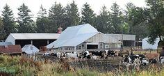 Iowa Dairy Panorama