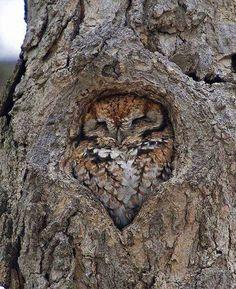 Funny Owls 43
