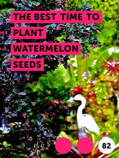 Companion planting is the art of growing plants that can help each other out. Several plants, both perennial and annual, can help asparagus grow. Growing Tree, Growing Plants, Growing Grass, Growing Vegetables, Aloe Vera, Dwarf Mondo Grass, Ground Cover Plants, Grass Seed, Evergreen Trees