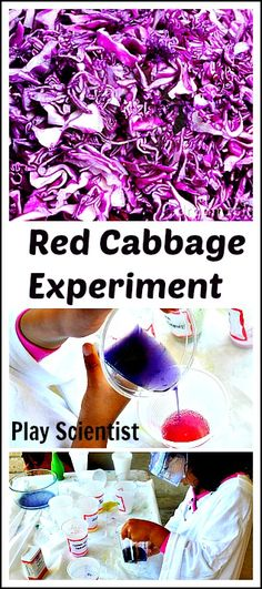 "Fun and classic red cabbage experiment. For a younger kid, cabbage water is the ""magic potion"" which changes colors. The color change is dramatic and beautiful! For older kids - great hands on way to teach about pH levels..#scienceexperiments #handsonscience."