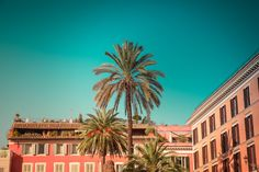 "Rome photograph,palm tree photo,dolce vita print,windows,turquoise sky,Italy street wall art,architecture art,colorful image, ""Spanish palm"""
