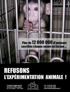 www.facebook.com/pages/Fondation-Brigitte-Bardot/660605300621460 Fondation Brigitte Bardot, France Europe, Animal Rights, Dream Team, Abandon, Spirit, Hero, Animals, Vegan