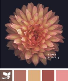 design-seeds.com is amazing. Would have been really helpful when I was trying to explain my wedding colors.