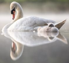 Beautiful Birds, Animals Beautiful, Swans, Animal Pictures, Cool Pictures, Wild Animals Photos, Tier Fotos, Animals Of The World, Cute Baby Animals