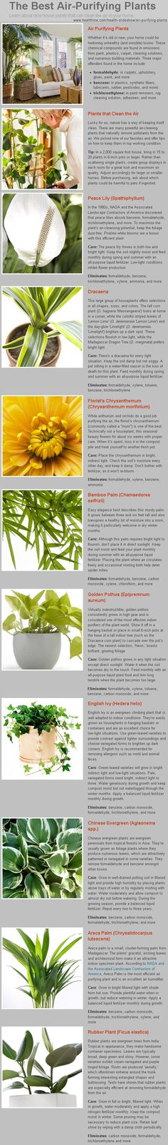 Air Purifying Plants for Healthy Indoor Air. NASA researchers determined which plants would be required on a sustainable earth ship. www.healthline.com/health-slideshow/air-purifying-plants