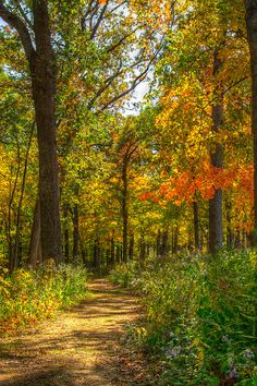 Ahmet krtl – Wyalusing State Park trail (Wisconsin) by Marc Kohlbauer cr. Wisconsin, Landscape Photography, Nature Photography, Park Trails, Autumn Scenes, Forest Path, Walk In The Woods, All Nature, Photo Canvas