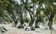 """The Willows,"" Salem Willows, Mass."