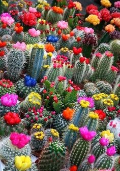 Beautiful Flower Colorful