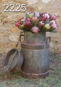 protea vintage - Google Search Wedding Flower Arrangements, Floral Arrangements, Wedding Flowers, Art Flowers, Flower Art, Protea Flower, Milk Cans, Flower Paintings, Afrikaans