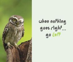"""When nothing goes right... go left.  Owlsome Moments ~ """"LIKE"""" us on Facebook"""