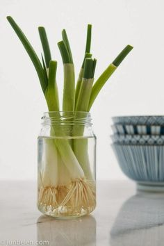 How to Grow Green Onions in a Jar - 101 Gardening