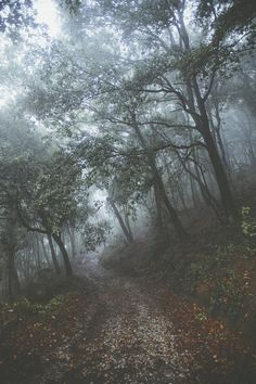 Find images and videos about beautiful, black and white and nature on We Heart It - the app to get lost in what you love. Forest Path, Tree Forest, Dark Forest, Forest Scenery, Misty Forest, Nature Sauvage, Mystique, Walk In The Woods, Pics Art