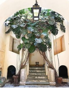 This 100 year old monstera is growing in a small town in southern Italy called Falerna Marina. Give a name to this fabulous queen! Plantas Indoor, Best Indoor Plants, Tropical Garden, Tropical Plants, Green Plants, Minimalist Home, Plant Decor, Houseplants, Garden Landscaping
