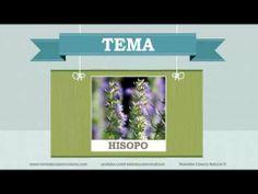 Beneficios, nutrientes y propiedades del hisopo. Más información en: http://www.remediocaseronatural.com/comidas-sanas-beneficios-hisopo.htm
